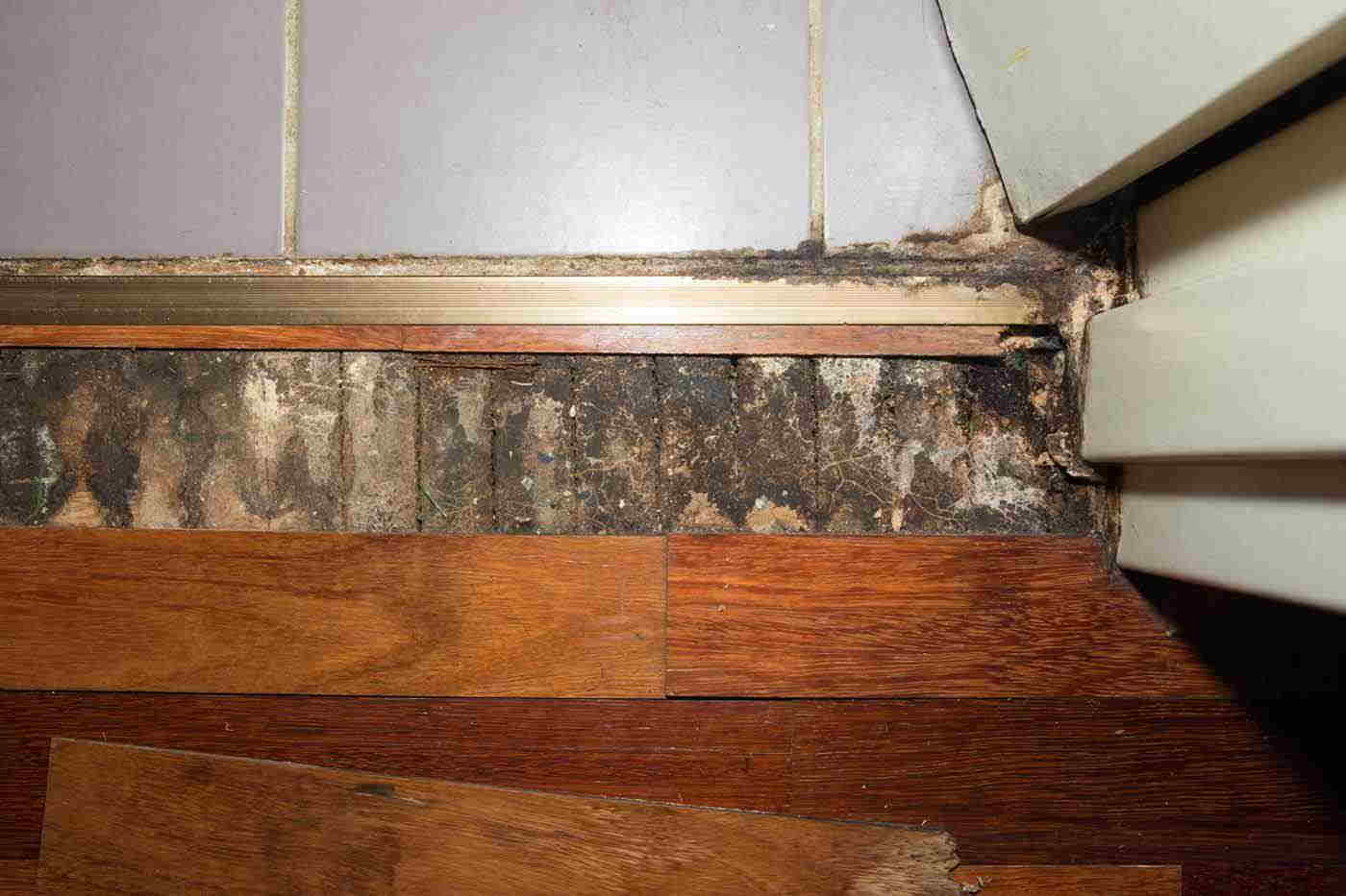removal of mould